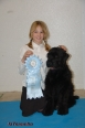 Black Russian Terrier, 4 and half, black