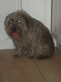 Glen of Imaal Terrier, 2 years, Gray