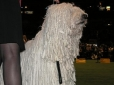 Komondor, 5 years, White