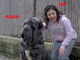 Neapolitan Mastiff, 4 years, Blue
