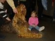 Otterhound, 1 year, Brown