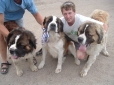 Saint Bernard, 3 and under, Brown & white