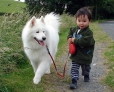 Samoyed, 8 months, White
