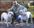 Dorset Olde Tyme Bulldogge, 2 Years, White