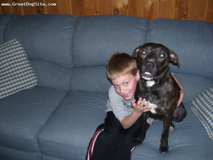 American Staffordshire Terrier, 1 year, brindle, heres a picture of my 6 year old son and joey when told to smile, joey seemed to understand too as you can see.