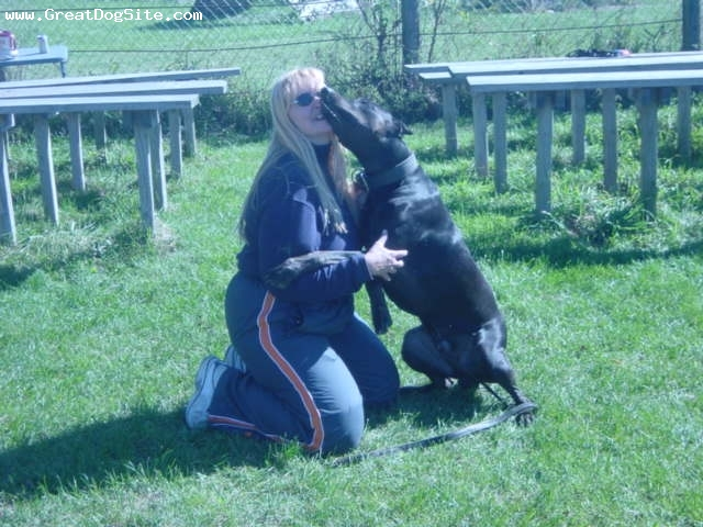 Canis Panther, 4 years, Black, Photo courtesy of Rock of Ages Kennel.
