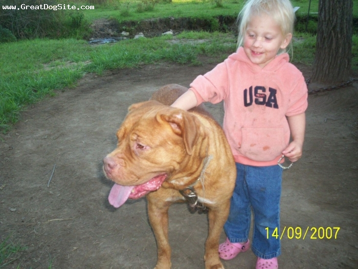 Dogue de Bordeaux, 2, auburn, This is Harley out of World Ch bloodlines, She is a great family Guard and companion,