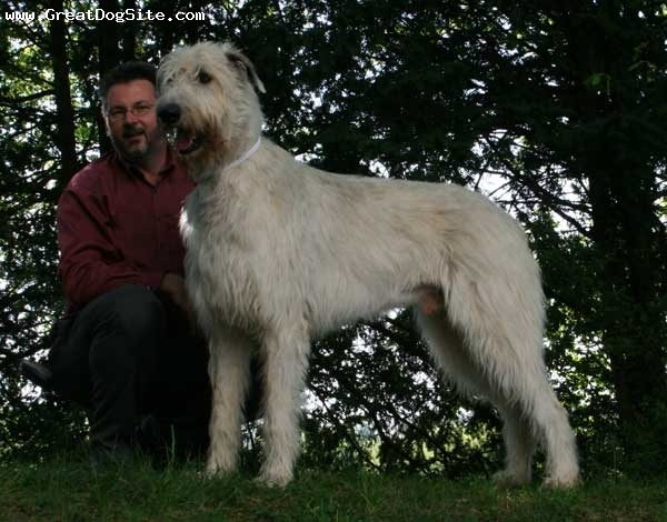 Irish Wolfhound, 2 years, White, Me and Lemmy.