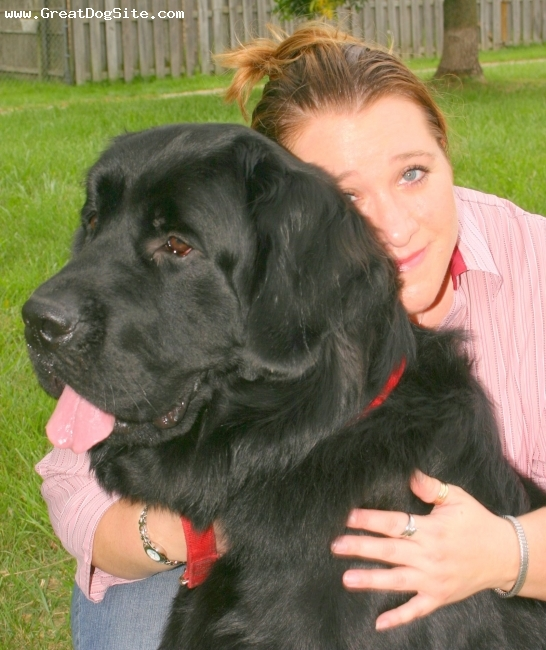 Newfoundland, 2, black, My baby and me.