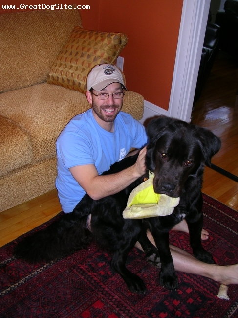 Newfoundland, 2.5, Black, Best dog ever! Eating my ducky slipper...